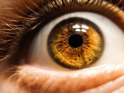 Revisions visuals com a mitjà per detectar malalties de manera precoç